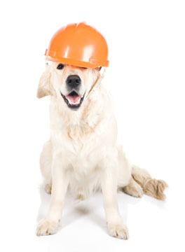Dog wearing a workmans hat